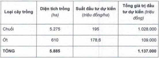 HAGL Agrico (HNG) tiếp tục tăng diện tích trồng chuối, nâng tổng đầu tư lên hơn 1.000 tỷ đồng - Ảnh 1.