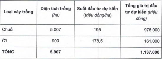 HAGL Agrico (HNG) tiếp tục tăng diện tích trồng chuối, nâng tổng đầu tư lên hơn 1.000 tỷ đồng - Ảnh 2.