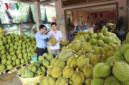 Tăng trưởng ngành nông nghiệp là điểm sáng của kinh tế Việt Nam - Ảnh 2.