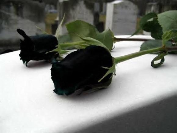 Hoa hồng đen nửa triệu đồng/bông vẫn hút khách dịp 20/10 - Ảnh 5.