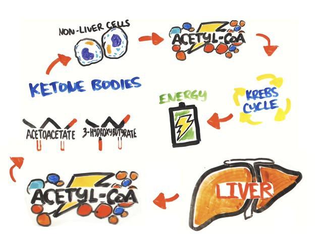 Đây là 4 điều hay ho xảy ra với cơ thể khi bạn nhịn ăn 3 ngày liền - Ảnh 2.