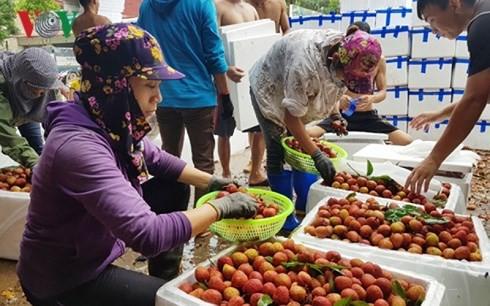 Nông sản Việt: Vì sao nơi bội thu, nơi phải... giải cứu? - Ảnh 1.