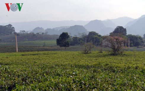 Sơn La thu trên 115 triệu USD từ xuất khẩu nông sản trong 10 tháng - Ảnh 1.