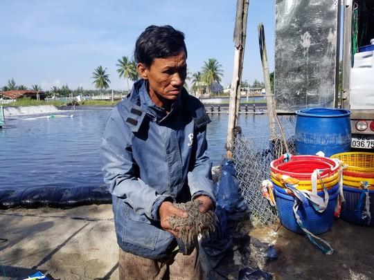 900.000 con tôm chết bất thường, dân nghi bị đầu độc - Ảnh 3.