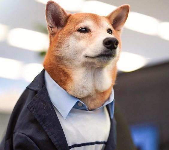 """Chó thời trang Bodhi cực """"ngầu"""" với mức lương 15.000 USD/tháng - Ảnh 1."""