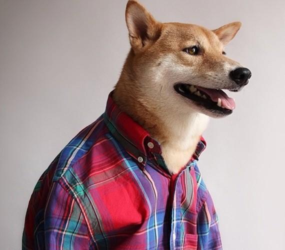 """Chó thời trang Bodhi cực """"ngầu"""" với mức lương 15.000 USD/tháng - Ảnh 3."""