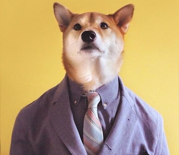 """Chó thời trang Bodhi cực """"ngầu"""" với mức lương 15.000 USD/tháng - Ảnh 4."""