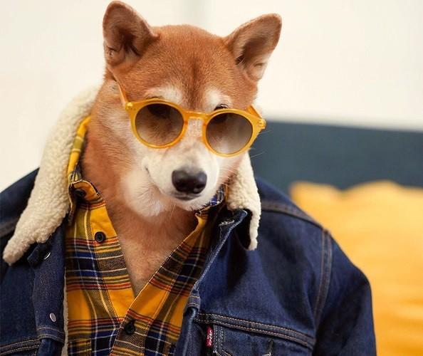 """Chó thời trang Bodhi cực """"ngầu"""" với mức lương 15.000 USD/tháng - Ảnh 6."""