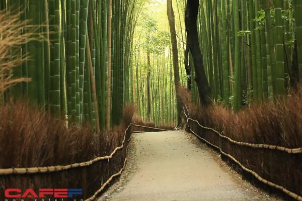 10 điểm du lịch nhất định phải ghé thăm khi đến Kansai Nhật Bản - Ảnh 1.