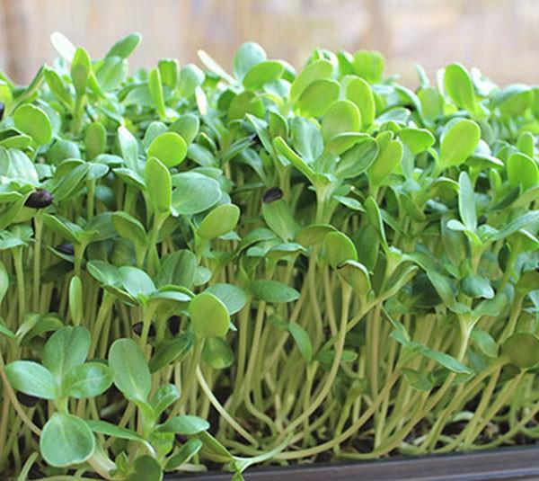 Rau ăn lá, rau sống, rau mầm ăn như thế nào để không bỏ phí dinh dưỡng - Ảnh 1.