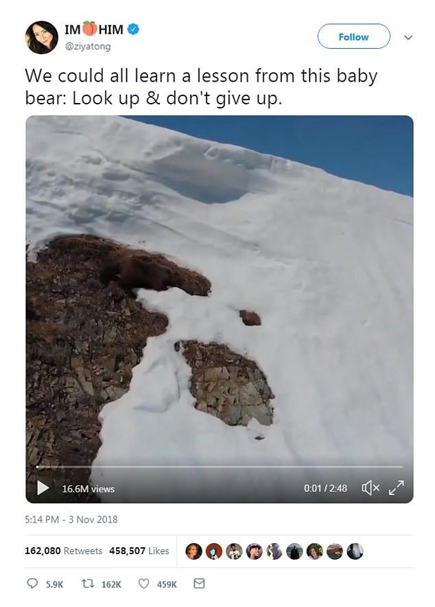 Video chú gấu con kiên nhẫn leo lên đỉnh núi tuyết truyền cảm hứng cho hàng triệu người với thông điệp: Đừng bao giờ bỏ cuộc! - Ảnh 3.