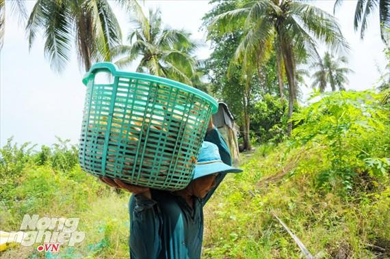 Cận cảnh nuôi cá ruộng mùa lũ ở miền Tây không cho ăn vẫn lớn như thổi - Ảnh 11.