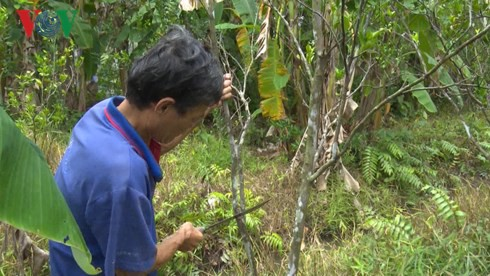 Giá cam sành liên tiếp sụt giảm, người trồng lỗ nặng - Ảnh 3.