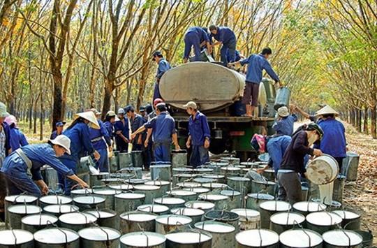 Xuất khẩu cao su thứ 3 thế giới, Việt Nam vẫn phải nhập hàng tỉ USD để sản xuất - Ảnh 1.