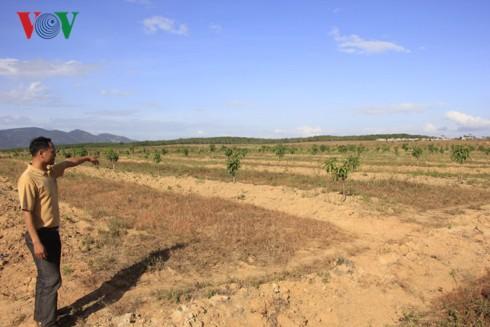 """Xé rào chuyển đổi đất rừng: Doanh nghiệp ở Gia Lai """"tiền trảm hậu tấu"""" - Ảnh 1."""