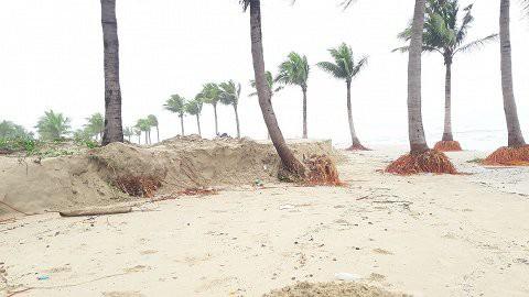 Ảnh: Sóng to, gió lớn làm sạt lở hàng trăm mét bờ biển đẹp bậc nhất miền Trung - Ảnh 13.