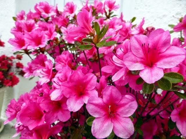 Những loại hoa mang tài, rước lộc vào nhà nhất định phải trưng ngày Tết - Ảnh 5.