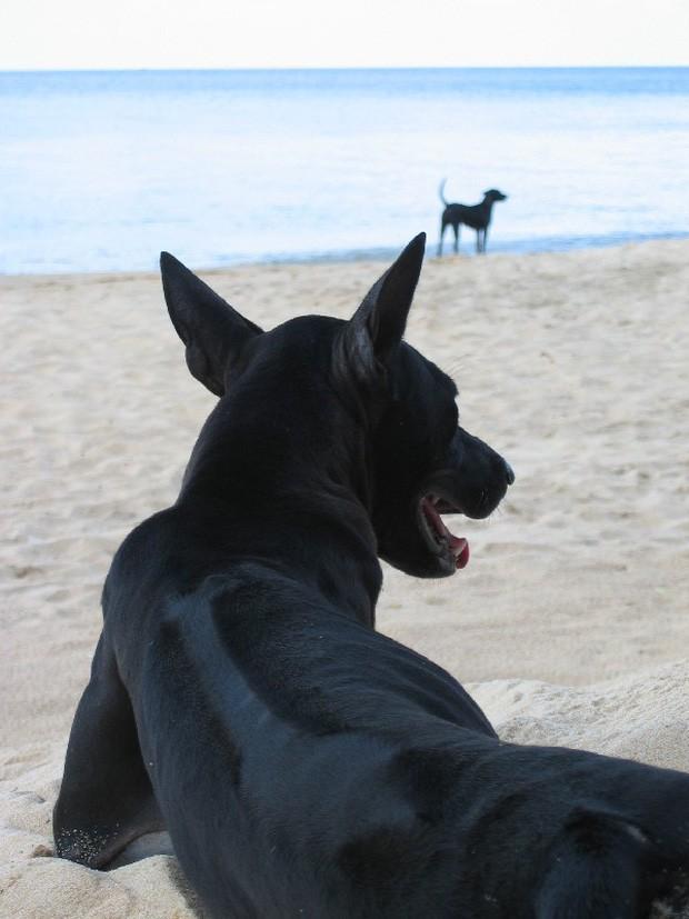 9 giống chó đắt tiền nhất thế giới, và Việt Nam có 1 trong số đó - Ảnh 3.