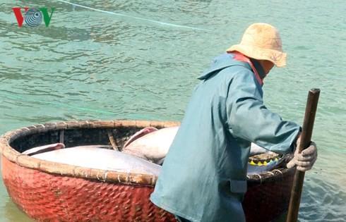 Đầu năm ngư dân Phú Yên trúng đậm cá ngừ đại dương - Ảnh 2.