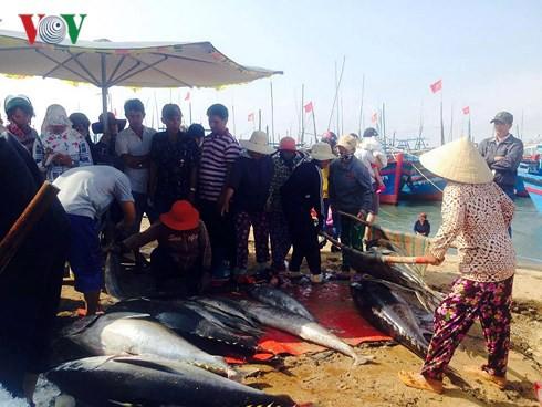 Đầu năm ngư dân Phú Yên trúng đậm cá ngừ đại dương - Ảnh 3.