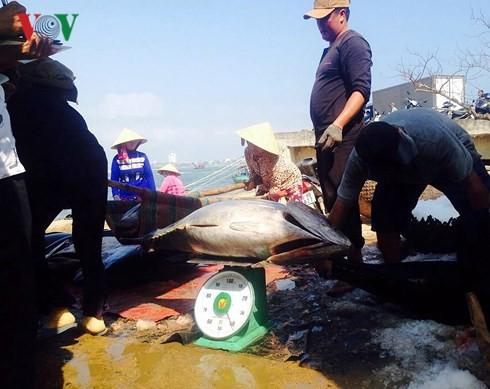 Đầu năm ngư dân Phú Yên trúng đậm cá ngừ đại dương - Ảnh 4.