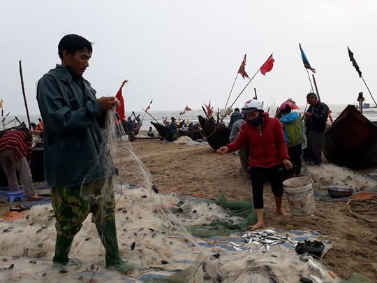 """Ngư dân Sầm Sơn trúng đậm """"lộc biển"""" ngày đầu năm mới - Ảnh 3."""