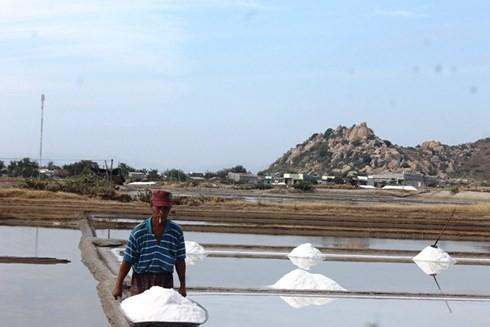 Diêm dân Ninh Thuận trúng vụ muối đầu năm - Ảnh 1.