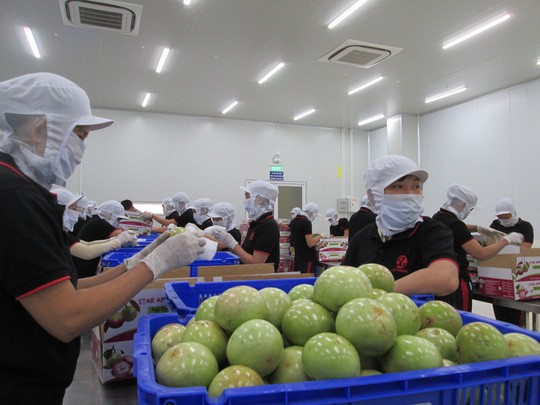 Cú hích 200 tỉ USD từ xuất khẩu: Kỳ tích thủy sản, rau quả - Ảnh 1.