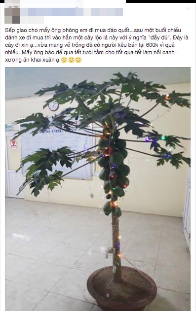 Sếp giao đi mua đào quất, nhân viên xin nguyên cây đu đủ trĩu quả về công ty chưng Tết - Ảnh 1.