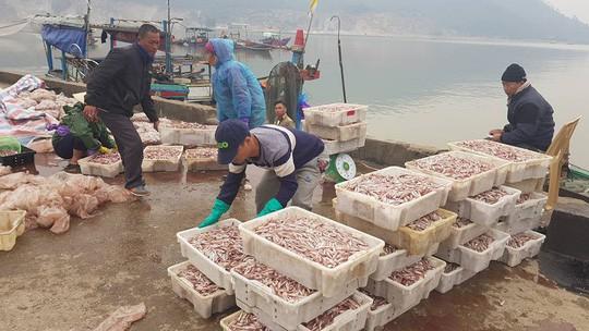 Ngư dân phấn khích trúng đậm lộc biển 4-5 tấn cá mỗi tàu - Ảnh 2.
