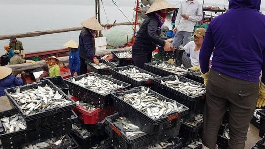 Ngư dân phấn khích trúng đậm lộc biển 4-5 tấn cá mỗi tàu - Ảnh 4.
