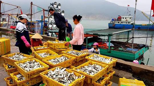 Ngư dân phấn khích trúng đậm lộc biển 4-5 tấn cá mỗi tàu - Ảnh 5.