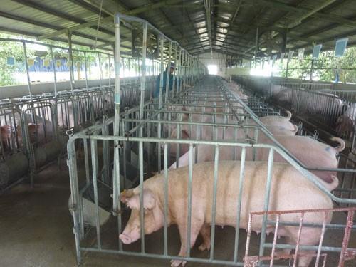 Chăn nuôi vẫn khó tứ bề - Ảnh 1.