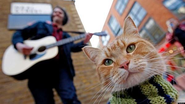 Cuộc đời chàng nghệ sĩ nghèo, nghiện ngập, vô gia cư bước sang trang mới nhờ... một chú mèo!  - Ảnh 1.
