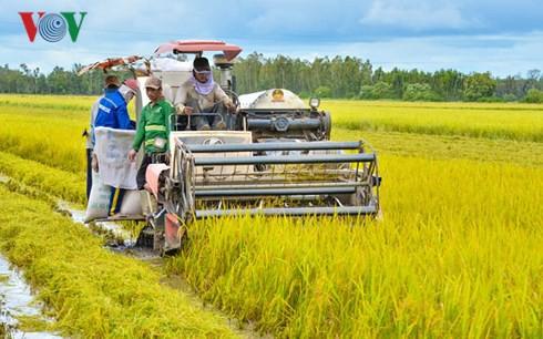 Liên kết sản xuất, nông dân không còn nỗi lo bị ép giá - Ảnh 1.
