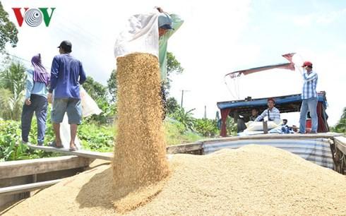 Liên kết sản xuất, nông dân không còn nỗi lo bị ép giá - Ảnh 2.