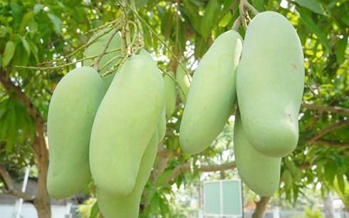 Xuất khẩu rau củ quả vẫn tăng mạnh, nhưng 93% là xuất thô và sơ chế - Ảnh 1.
