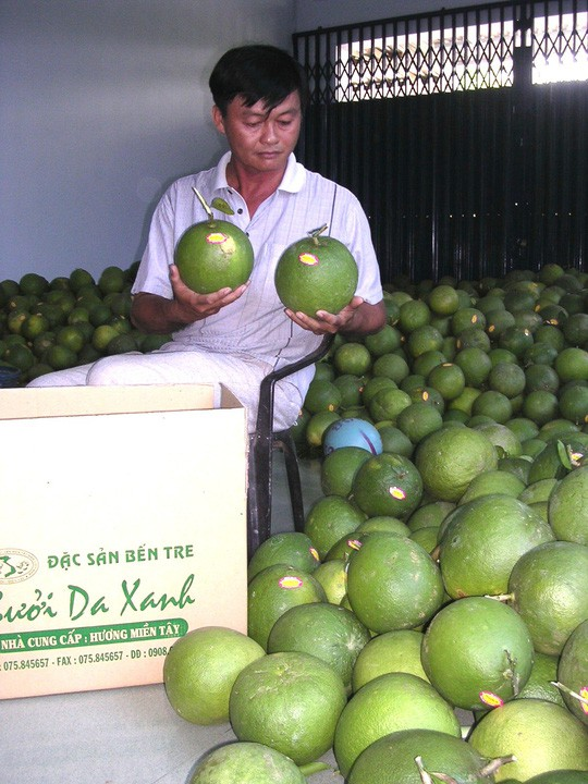 Bưởi da xanh, dừa xiêm xanh Bến Tre được cấp giấy đăng ký chỉ dẫn địa lý - Ảnh 1.