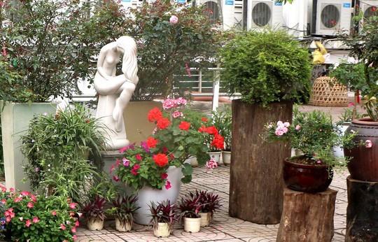 Ngắm 1.000 cây hoa hồng khoe sắc, tỏa hương Ngày quốc tế phụ nữ - Ảnh 11.