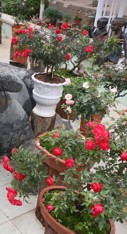 Ngắm 1.000 cây hoa hồng khoe sắc, tỏa hương Ngày quốc tế phụ nữ - Ảnh 12.