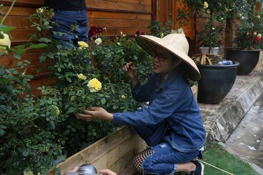 Ngắm 1.000 cây hoa hồng khoe sắc, tỏa hương Ngày quốc tế phụ nữ - Ảnh 5.
