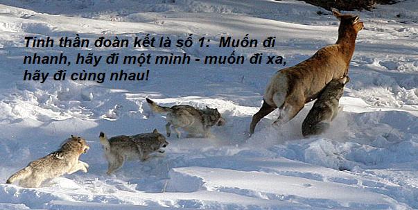 Chuyện cuối tuần: Câu chuyện chó sói xung trận - hãy lạnh lùng như bầy sói khi chọn cách đối đầu với thử thách - Ảnh 2.