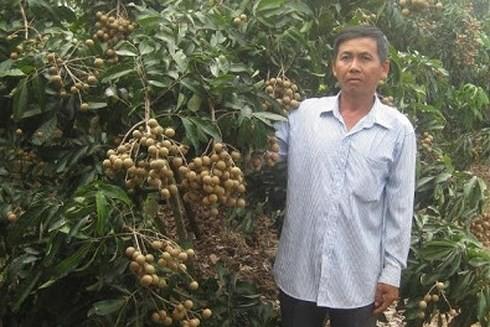 Lãi 2 tỷ đồng mỗi năm nhờ trồng nhãn  - Ảnh 1.