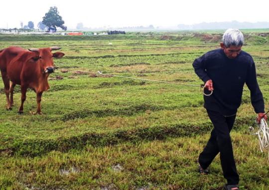 Vụ thu phí trâu, bò gặm cỏ: Yêu cầu trả lại cho dân trước ngày 30-4 - Ảnh 1.