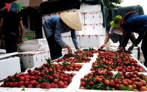 Kỳ tích xuất khẩu rau quả vượt dầu thô: Còn nhiều việc phải làm - Ảnh 1.