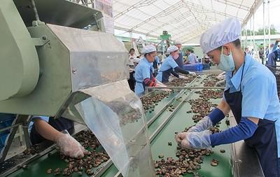 Khó tăng sản lượng, ngành điều chuyển hướng tăng chất lượng - Ảnh 1.
