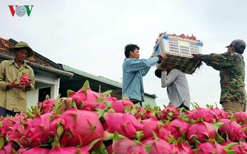 Trung Quốc dẫn đầu các quốc gia nhập khẩu rau quả của Việt Nam - Ảnh 1.