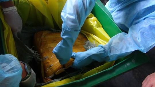 TP HCM tiêu huỷ gần 14 tấn vú heo thối - Ảnh 2.