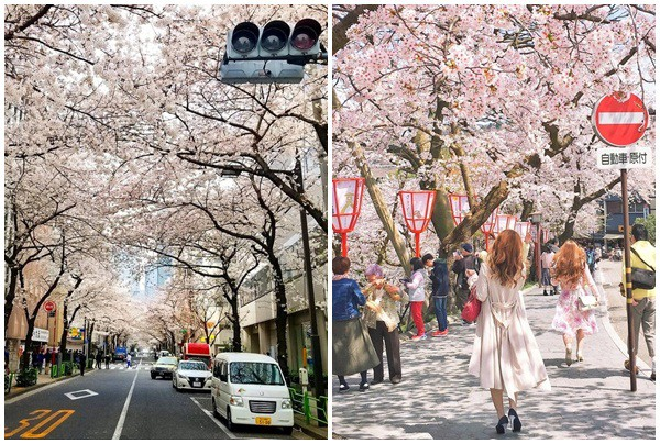12 hình ảnh chứng minh Nhật Bản đến từ hành tinh khác: Dịch vụ tiện nghi, con người lịch sự và văn minh tới đáng kinh ngạc! - Ảnh 12.