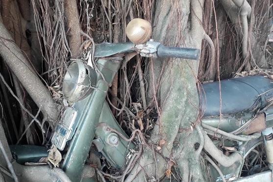 Cây cổ thụ ôm chặt cứng chiếc xe máy suốt 25 năm ở Bình Dương - Ảnh 3.